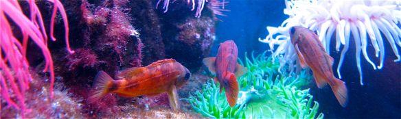 tropical fish at the New England Aquarium