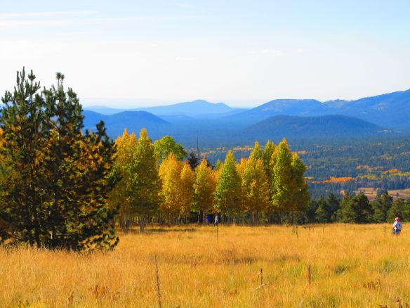 view of the San Francisco peaks in Flagstaff
